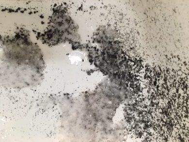 文京区 風呂釜洗浄⑮