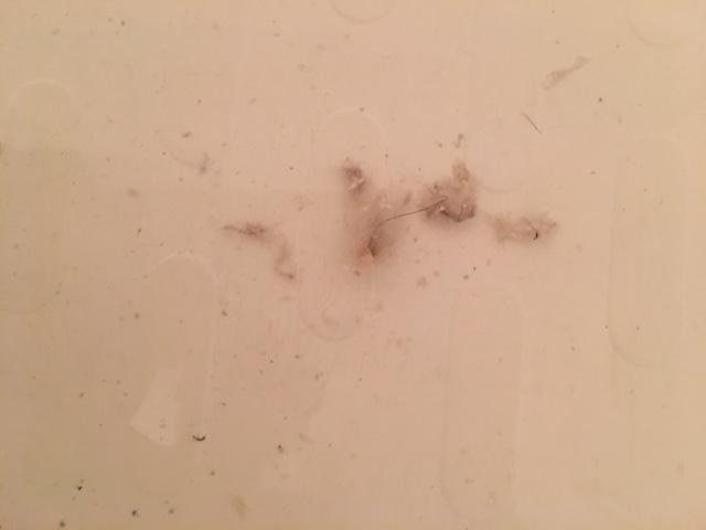 藤沢市 風呂釜追い焚き配管洗浄⑥